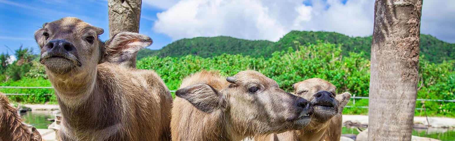 由布島にいる動物たち